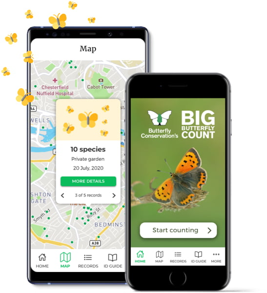Big butteryfly Count 2021 App on phone
